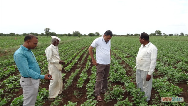 Field visit to Redgram seed production plots under SEED HUB PROJECT at Shindewadi, Tal. Madha, Dist. Solapur