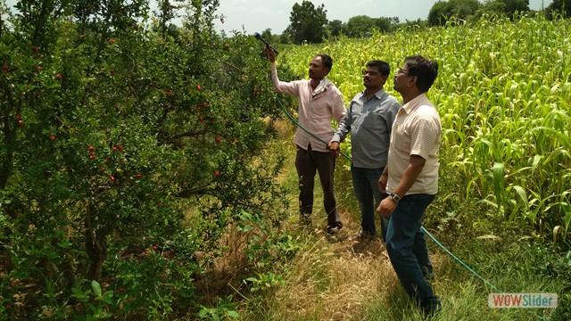 RKVY Farmers FIRST - Farm Visit at Aadhegaon, Tal. Mohol, Dist. Solapur